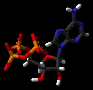 620px-ATP-xtal-3D-sticks